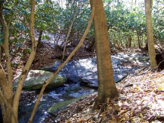 Stream in North Carolina on acreage